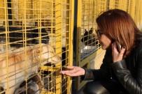 HALUK LEVENT - Selcan Asyalı'dan Nilüfer Hayvan Bakım Ve Tedavi Merkezi'ne Tam Not