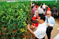 KUZEY AFRIKA - Uluslararası Yaş Sebze Ve Meyve İhracatçıları Zirvesi Serik'te Başlıyor