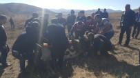 Yonca Tarlasına Giren 250 Büyükbaş Hayvan Zehirlendi