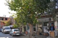 Bir Gövdede İki Farklı Ağaç