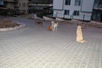 İzmir'de Öğrencinin Yaşadığı Sokak Köpeği Dehşeti Hayatını Karartıyordu