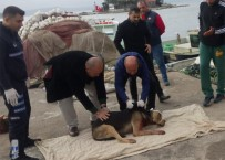 Kendisine Saldırdığını Öne Sürdüğü Köpeği Bıçakladı