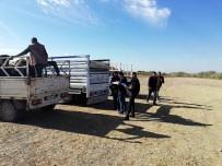 TARıM İŞLETMELERI GENEL MÜDÜRLÜĞÜ - Musabeyli İlçesinde 19 Çiftçiye 95 Büyükbaş Hayvan Dağıtıldı
