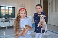 KOZLUCA - Ölüme Terk Edilen Yavru Köpeklere Çocuklar Sahip Çıktı
