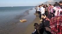 DENİZ KAPLUMBAĞALARI - Sağlığına Kavuşan Deniz Kaplumbağaları Denizle Buluştu