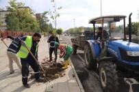 SIIRT BELEDIYESI - Siirt'te Ağaç Dikme Çalışması Başlatıldı