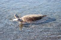DENİZ KAPLUMBAĞALARI - Tedavisi Biten Kaplumbağalar Denizle Buluştu