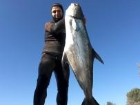 Zıpkınla 1,5 Metre Boyunda 40 Kiloluk Liça Balığını Avladı