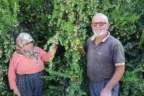 ERENTEPE - 30 Yıl Önce Köye Gelen Öğretmen Hayatlarını Değiştirdi