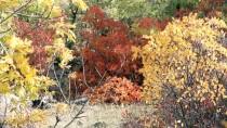 Diyarbakır'da Sonbahar Güzelliği Yaşanıyor