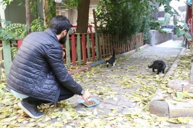 Hayvanlara Şiddete Dayanamadı, Kedi Belgeseli Çekti