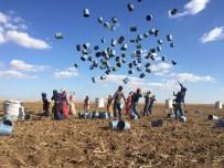 MEVSİMLİK İŞÇİ - Mevsimlik Tarım İşçilerinin Eve Dönüş Sevinci