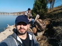 KAYGıSıZ - Yaralı Pelikan Tedavi Altına Alındı