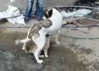 YAVRU KÖPEK - Yavru Köpek Mahsur Kaldığı Yerden Kurtarılınca Annesini Emmeye Başladı
