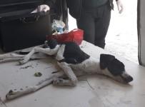 Zehirlenen Köpeğe Vatandaşlar Sahip Çıktı