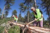 ORMAN GENEL MÜDÜRLÜĞÜ - Elleri Nasırlı Anadolu Kadını Ekmeğini Ormandan Çıkarıyor