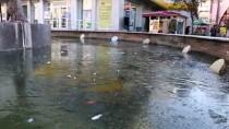 BUZ SARKITLARI - Soğuk Hava Nedeniyle Süs Havuzları Buz Tuttu