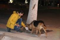 SİGORTA ŞİRKETİ - Gençler Sokak Hayvanlarına Düzenli Mama Dağıtıyor