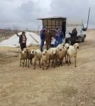 Yozgat'ta Küçükbaş Hayvan Hırsızları Tutuklandı