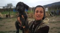 PROTEZ BACAK - Hasta Hayvanlar İçin Barınak Kurdu