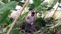 ORMAN MÜDÜRLÜĞÜ - Mersin'de Hortum Seralara Zarar Verdi