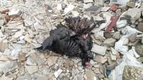 MUSTAFA ARSLAN - (Özel) Kağıthane'de Eski Mandırayı Su Bastı, Çok Sayıda Hayvan Telef Oldu