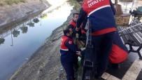 SULAMA KANALI - Sulama Kanalında Mahsur Kalan Köpeği Cankur Kurtardı