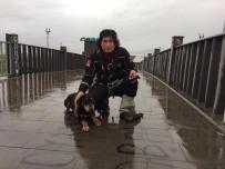 AFAD Ekipleri Bu Kez Dere Sularına Kapılan Köpeği Kurtardı
