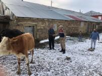 BİTLİS - Çaldıkları Hayvanları Satmaya Çalışınca Yakalandılar