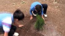 FAHRETTİN ALTAY - Ev Ödeviyle 'Dikili Ağaçları' Oldu