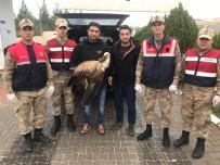 KARAALI - Jandarmanın Yaralı Halde Bulduğu Akbaba Tedavi Altına Alındı