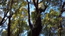 ORMAN GENEL MÜDÜRLÜĞÜ - Ormanlar Yarasalarla Korunacak