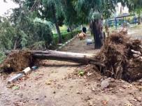 ÇAM AĞACI - Şiddetli Fırtına Ağaçları Devirdi