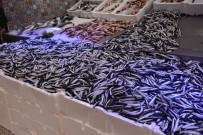 Sinop'ta hamsi fiyatı arttı
