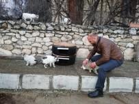 Sokaktaki Kediler Üşümesin Diye Lastikten Kedi Evi Yaptı