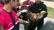 REHABİLİTASYON MERKEZİ - Yaralı Akbabayı Jandarma Kurtardı