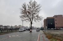 VERGİ DAİRESİ - Akşehir Belediyesi Ağaçlara Zarar Vermeden Çalışmalarını Sürdürüyor