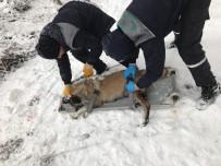 OSMANGAZI BELEDIYESI - Donmak Üzere Olan Köpekler Kurtarıldı