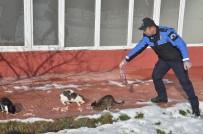 TOPLUM DESTEKLI POLISLIK - Polis Ve Öğrenciler, Sokak Hayvanları İçin Doğaya Yem Bıraktı