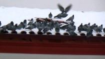 İLGİNÇ GÖRÜNTÜ - Yozgat'ta Esnaf Güvercinleri Aç Bırakmıyor