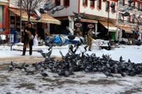 10 Yıldır Muhtarlık Maaşının Bir Kısmını Güvercinlere Harcıyor
