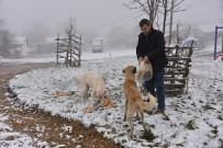 BOZÜYÜK BELEDİYESİ - Bozüyük Belediyesi Kırsaldaki Sahipsiz Sokak Hayvanlarını Unutmadı