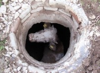 Kuyuya Düşen İnek Köpek Sayesinde Kurtarıldı