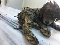 YAVRU KÖPEK - Yaralı Halde Bulunan Yavru Köpek Yaşama Tutundu
