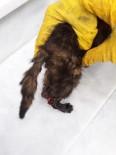 Yaralı Kediye İtfaiyeci Şefkati