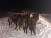 MEHMET DEMIR - Atlar İçin 20 Saatlik Kurtarma Operasyonu