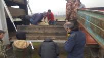 Çaycuma'da Genç Çiftçiler Küçükbaş Dağılımı Yapıldı