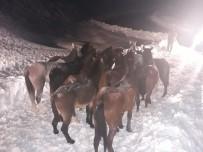 MEHMET DEMIR - Karda Mahsur Kalan Atlar İçin Seferberlik