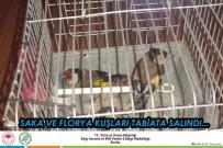 FLORYA - Antalya'da Saka Ve Florya Kuşları Doğaya Salındı