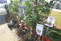 GÜBRE - Çiftçilere Meyve Fidanı Desteği